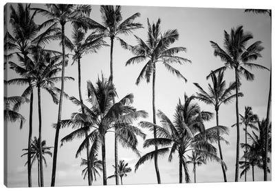 Palm Heaven Canvas Art Print