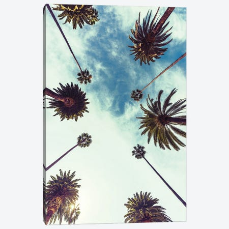 Palm Sky II Canvas Print #FBK362} by Design Fabrikken Canvas Artwork