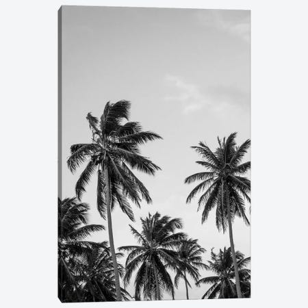 Palms in Grey Canvas Print #FBK364} by Design Fabrikken Canvas Print
