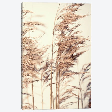 Reed I Canvas Print #FBK386} by Design Fabrikken Canvas Print