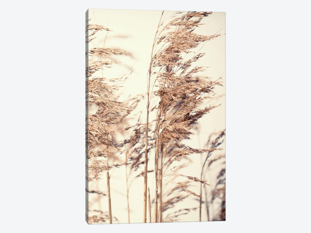 Reed I by Design Fabrikken 1-piece Canvas Art Print