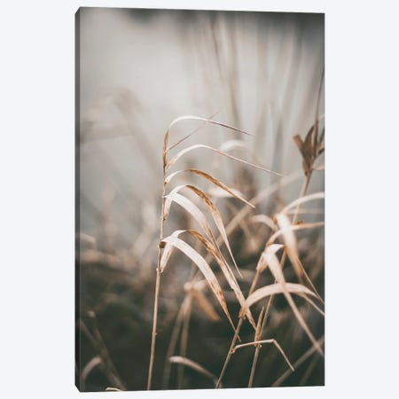 Reed II Canvas Print #FBK387} by Design Fabrikken Canvas Print