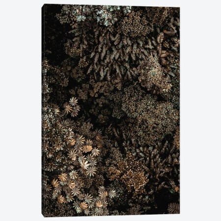 Secret XI Canvas Print #FBK410} by Design Fabrikken Canvas Wall Art