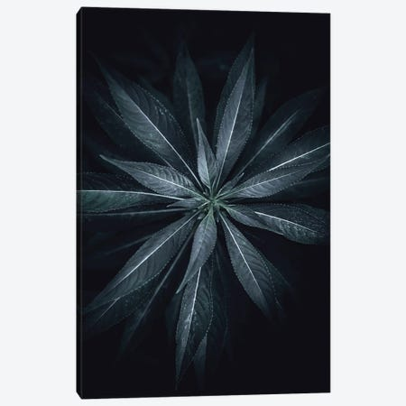 Star Flower Canvas Print #FBK430} by Design Fabrikken Canvas Art