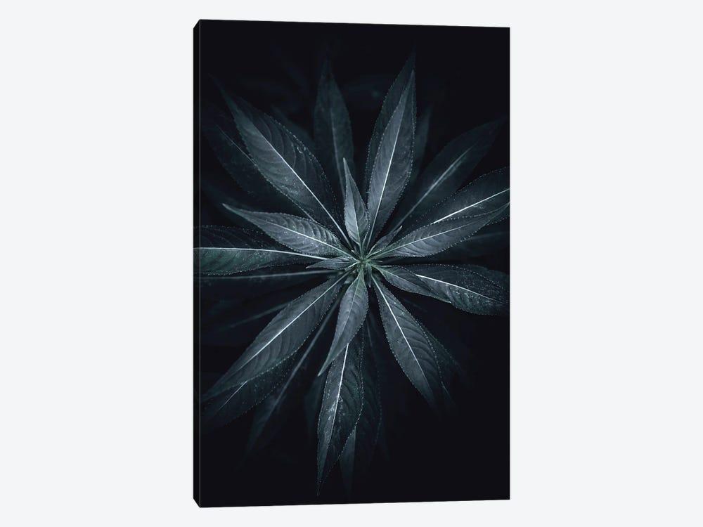 Star Flower by Design Fabrikken 1-piece Canvas Art Print