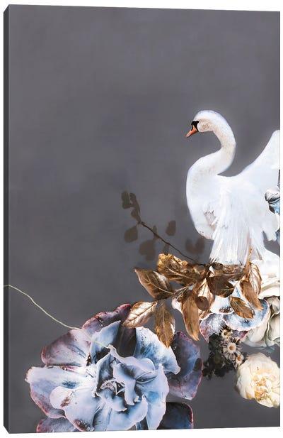 Swan Gold II Canvas Art Print