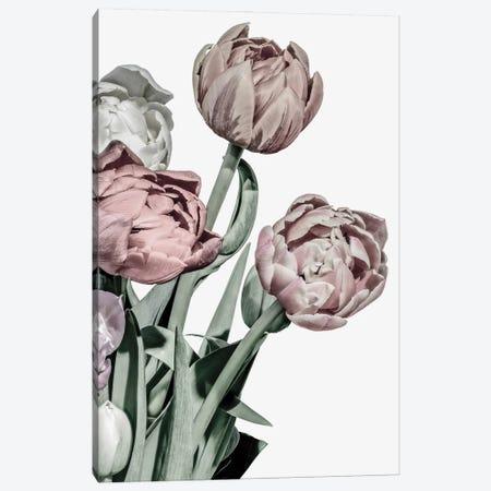Tulips Bright Canvas Print #FBK458} by Design Fabrikken Canvas Art