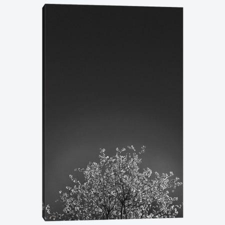 Twinkling Lights I Canvas Print #FBK462} by Design Fabrikken Art Print
