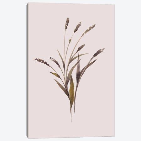 Wheat Canvas Print #FBK471} by Design Fabrikken Canvas Artwork