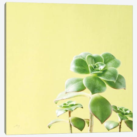 Succulent Simplicity X Canvas Print #FBR10} by Felicity Bradley Canvas Print