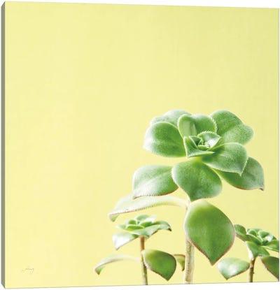 Succulent Simplicity X Canvas Art Print
