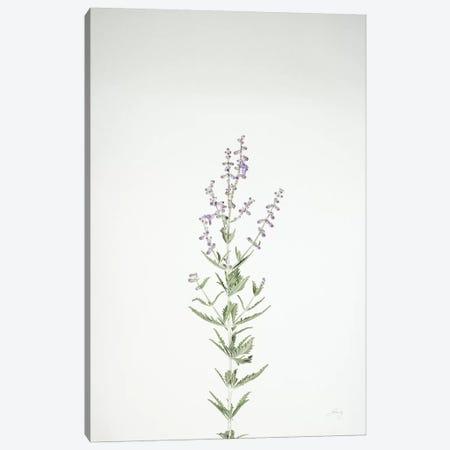 Simple Stems III Canvas Print #FBR15} by Felicity Bradley Canvas Art