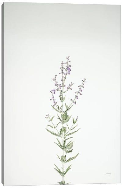 Simple Stems III Canvas Art Print