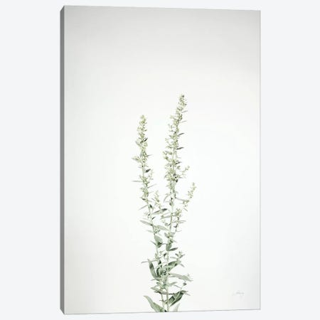 Simple Stems IV Canvas Print #FBR16} by Felicity Bradley Canvas Wall Art