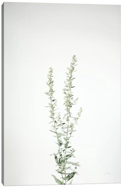 Simple Stems IV Canvas Art Print