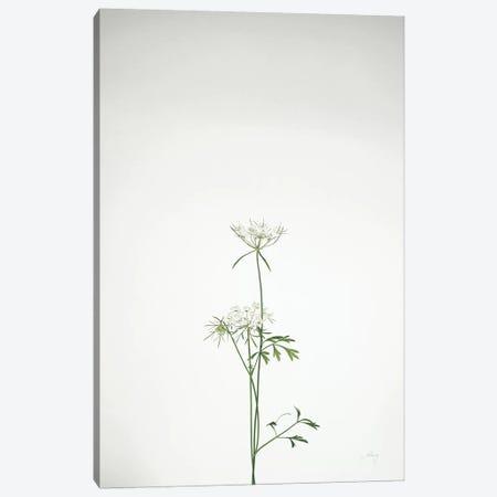 Simple Stems VI Canvas Print #FBR18} by Felicity Bradley Art Print