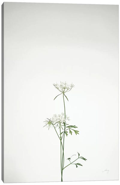 Simple Stems VI Canvas Art Print