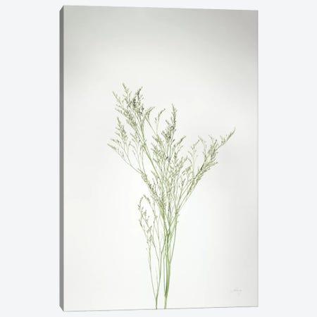 Simple Stems VII Canvas Print #FBR19} by Felicity Bradley Art Print