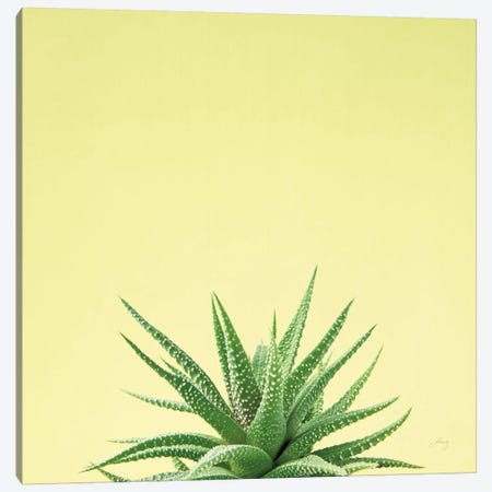 Succulent Simplicity I Canvas Print #FBR1} by Felicity Bradley Canvas Wall Art