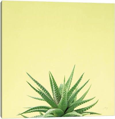 Succulent Simplicity I Canvas Art Print