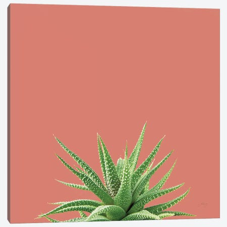 Succulent Simplicity I Coral Canvas Print #FBR20} by Felicity Bradley Canvas Artwork