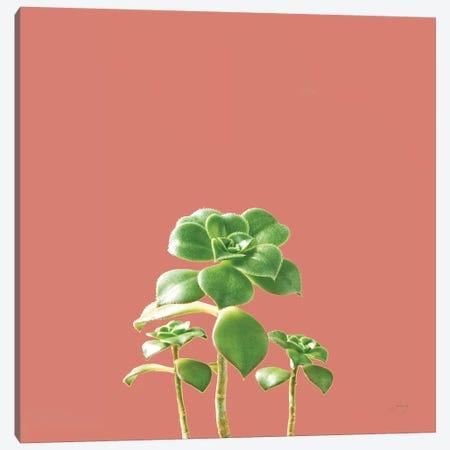 Succulent Simplicity IX Coral Canvas Print #FBR21} by Felicity Bradley Canvas Art