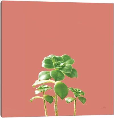 Succulent Simplicity IX Coral Canvas Art Print