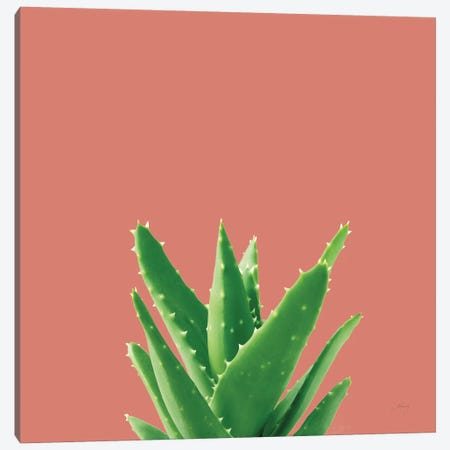 Succulent Simplicity V Coral Canvas Print #FBR22} by Felicity Bradley Canvas Art