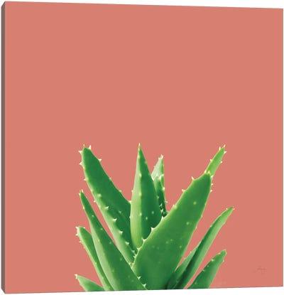 Succulent Simplicity V Coral Canvas Art Print