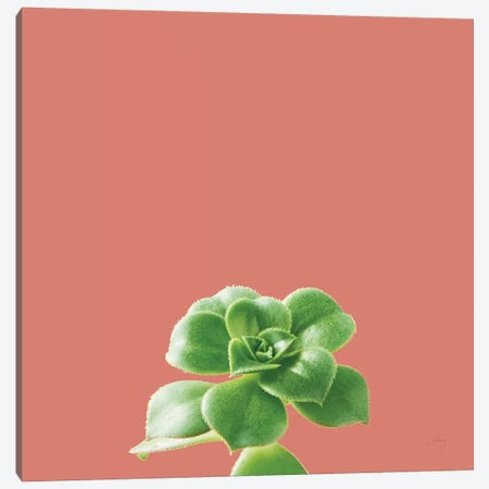 Succulent Simplicity VII Coral Canvas Print #FBR23} by Felicity Bradley Canvas Art