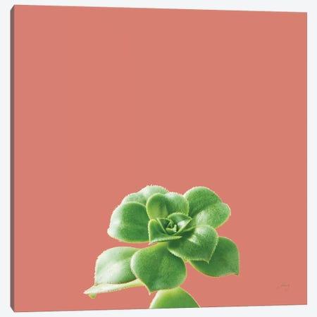 Succulent Simplicity VII Coral Canvas Print #FBR23} by Felicity Bradley Canvas Art