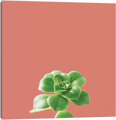 Succulent Simplicity VII Coral Canvas Art Print
