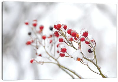 Winter Berries II Canvas Art Print