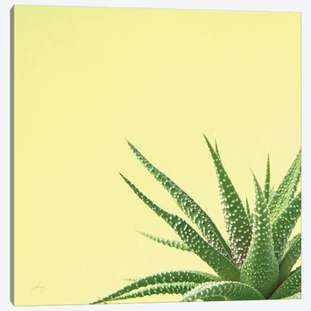 Succulent Simplicity II Canvas Print #FBR2} by Felicity Bradley Canvas Wall Art