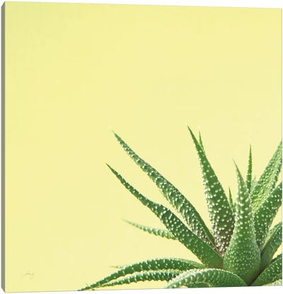 Succulent Simplicity II Canvas Art Print