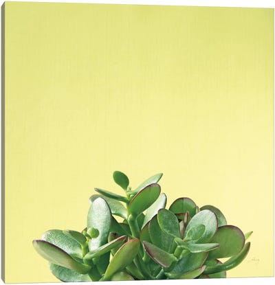 Succulent Simplicity III Canvas Art Print