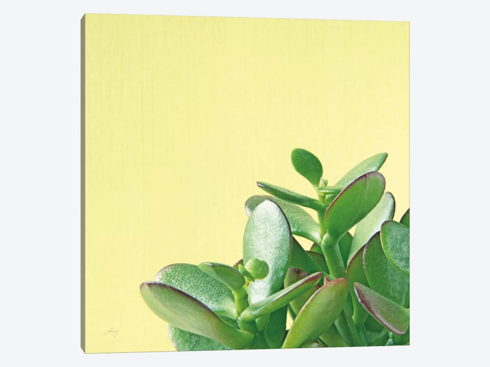 Succulent Simplicity IV by Felicity Bradley 1-piece Canvas Artwork