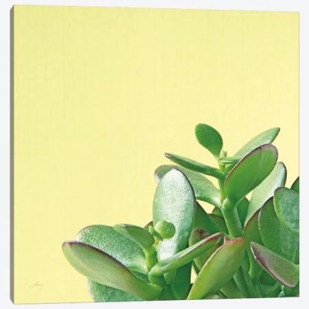 Succulent Simplicity IV 3-Piece Canvas #FBR4} by Felicity Bradley Canvas Print