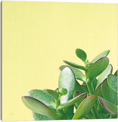 Succulent Simplicity IV Canvas Art Print