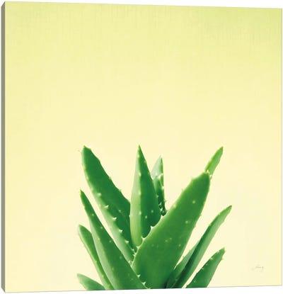 Succulent Simplicity V Canvas Art Print