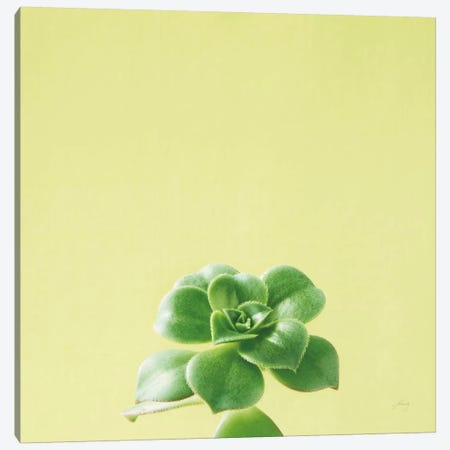 Succulent Simplicity VII Canvas Print #FBR7} by Felicity Bradley Art Print