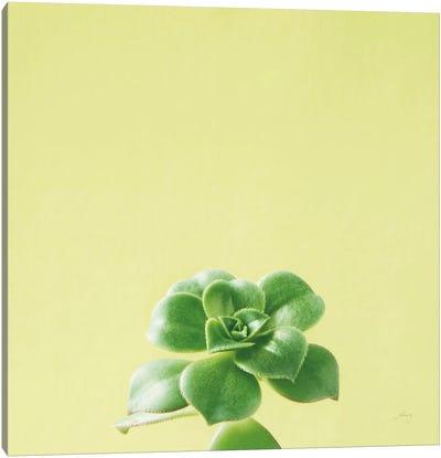 Succulent Simplicity VII Canvas Art Print