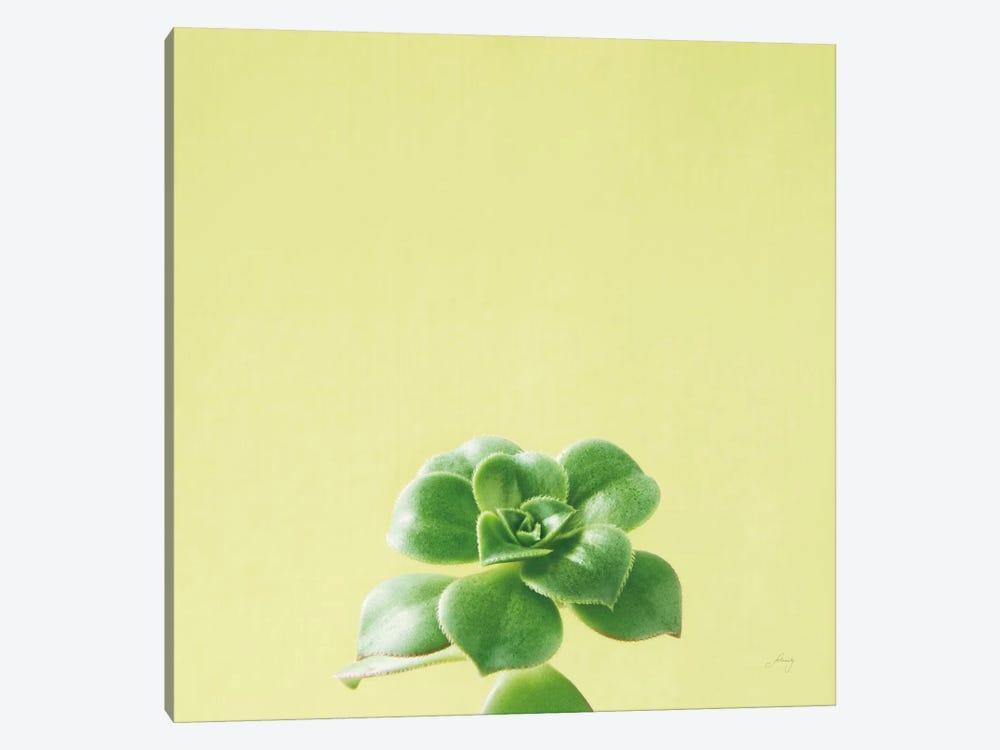 Succulent Simplicity VII by Felicity Bradley 1-piece Art Print