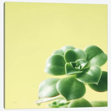 Succulent Simplicity VIII Canvas Print #FBR8} by Felicity Bradley Canvas Wall Art