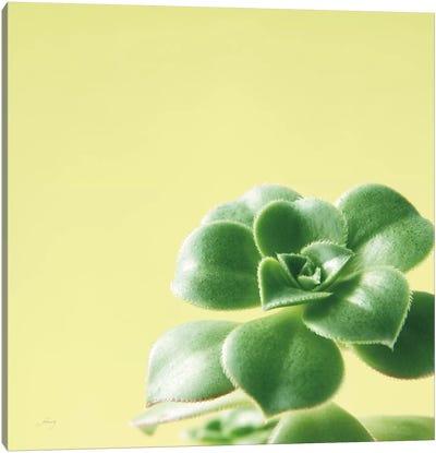 Succulent Simplicity VIII Canvas Art Print