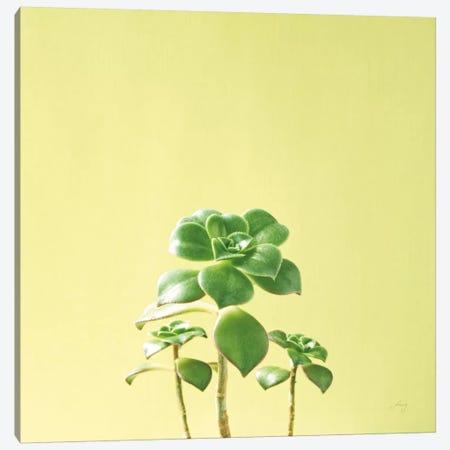 Succulent Simplicity IX Canvas Print #FBR9} by Felicity Bradley Canvas Artwork