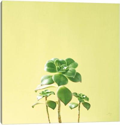 Succulent Simplicity IX Canvas Art Print