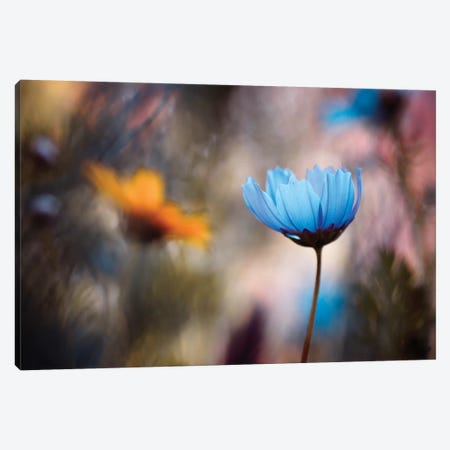 Do You Wanna Dance With Me Canvas Print #FBV1} by Fabien Bravin Canvas Wall Art