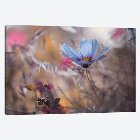 Things That Flowers Tell Canvas Print #FBV23} by Fabien Bravin Canvas Wall Art