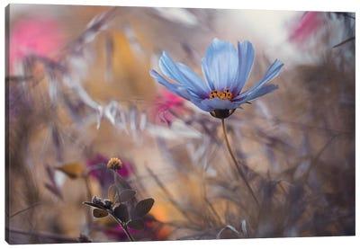 Things That Flowers Tell Canvas Art Print